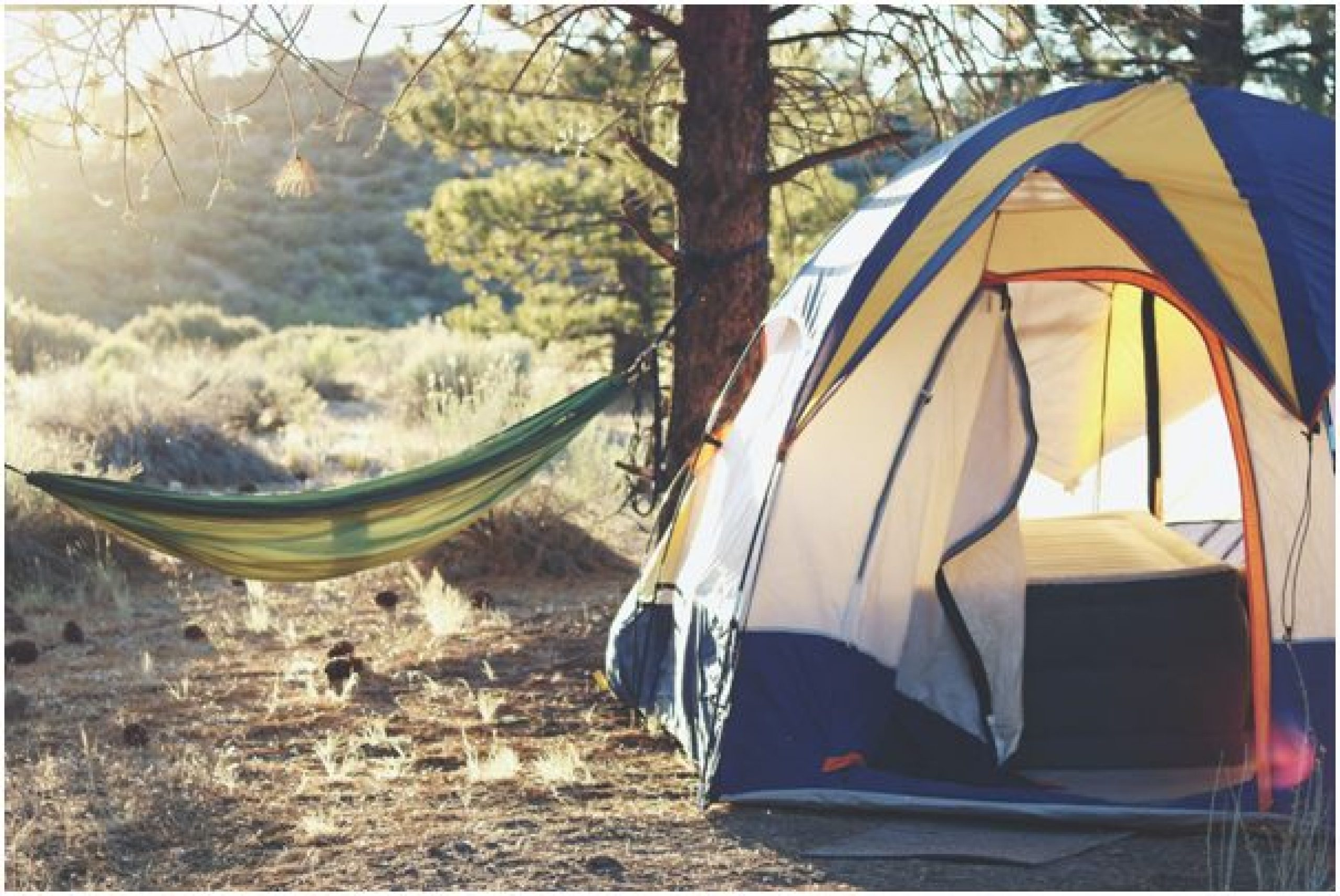 Tent and hammock in the woods