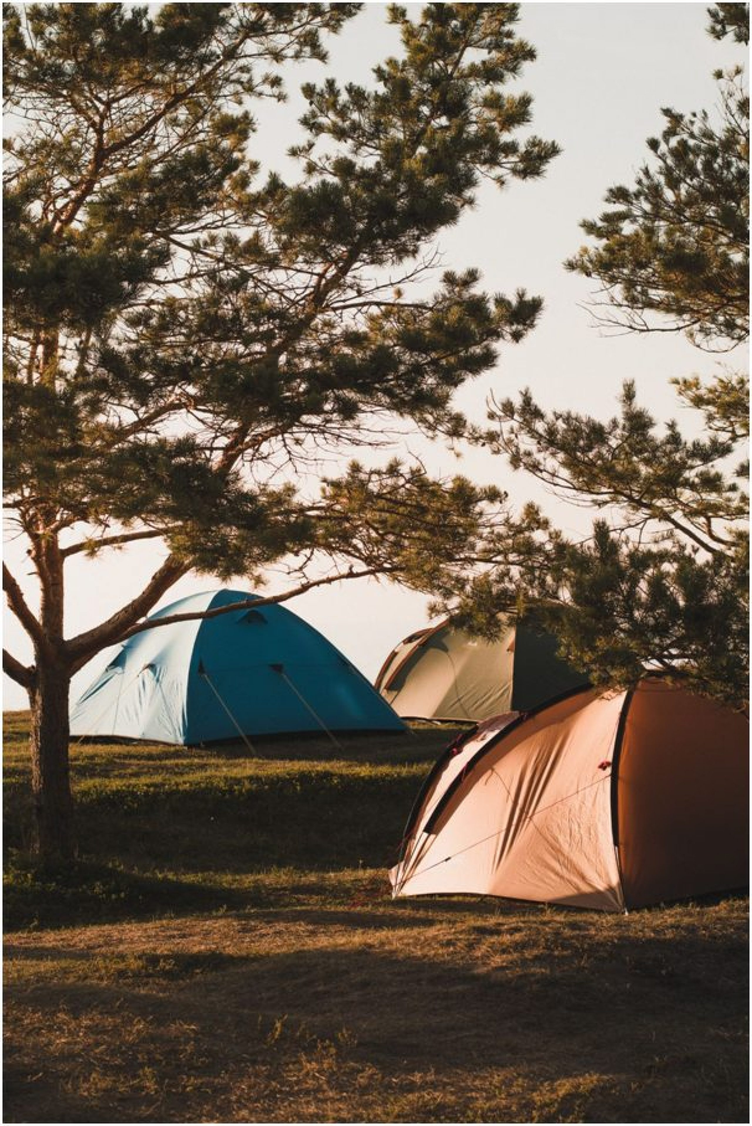 Tents at a camping site